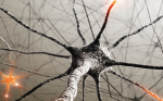 Edaravone in Amyotrophic Lateral Sclerosis—Lessons from the Clinical Development Program and the Importance of a Strategic Clinical Trial Design